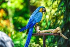 Papegoja med bokehbakgrund royaltyfria foton
