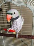 Papegoja med mat Arkivfoton