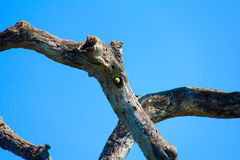 Papegoja med stället Royaltyfri Bild