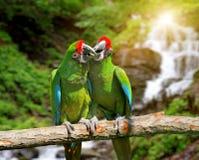 Papegoja mot tropisk vattenfallbakgrund Royaltyfria Bilder