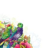 Papegoja och blommor vektor illustrationer
