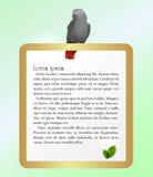 Papegoja och guld- ram Royaltyfria Foton