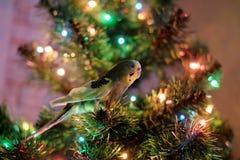 Papegoja och julgran Arkivfoto
