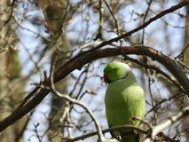 Papegoja och vår Fotografering för Bildbyråer