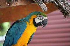 Papegoja på djungelön, Miami Beach, Florida royaltyfri fotografi