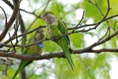 Papegoja på en tree Royaltyfri Bild