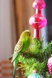 Papegoja på ett träd för nytt år arkivfoton