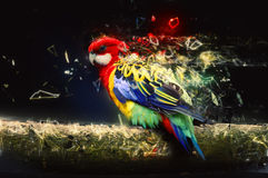 Papegoja på filialen, abstrakt djurt begrepp Arkivfoto