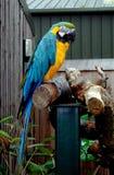 Papegoja på sittpinnen Royaltyfri Foto