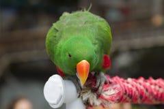 Papegoja på skärm Royaltyfri Bild