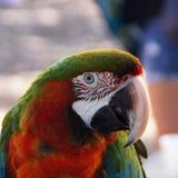 Papegoja på stranden Arkivfoto