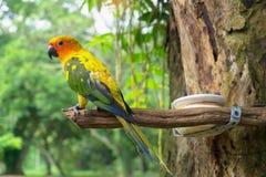 Papegoja på träd Arkivbilder