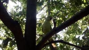 Papegoja på träd Royaltyfria Bilder