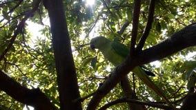 Papegoja på trädet som naturligt ser Arkivbilder