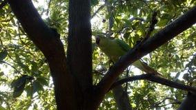 Papegoja på trädet som naturligt ser Arkivbild