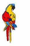 Papegoja på vit bakgrund Royaltyfri Bild