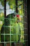 Papegoja som ser upp arkivbilder