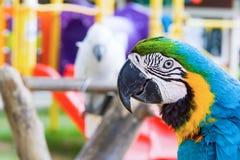 Papegojacloseupstående på papegojadomstolen Arkivfoton