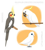PapegojaCockatiel Corella Cockatoo Cartoon Arkivbild