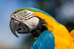 Papegojacolourfullstående arkivfoton