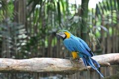 Papegojafågel Arkivbild