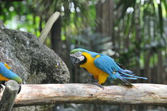 Papegojafågel Royaltyfri Foto