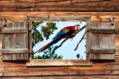 Papegojafågel Royaltyfri Bild