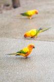 Papegojafågel Royaltyfria Bilder