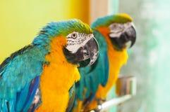 Papegojafågel Arkivbilder