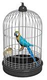 Papegojafågel i en bur Arkivfoton