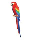 Papegojafågel som isoleras på vit bakgrund också vektor för coreldrawillustration vektor illustrationer