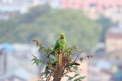 Papegojafågeln sticker på träd arkivfoto
