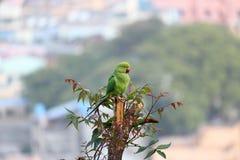 Papegojafågeln sticker på träd arkivbild