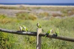 Papegojafåglar Fotografering för Bildbyråer