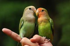papegojahusdjur Royaltyfri Fotografi