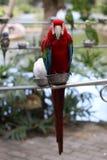 Papegojan Fotografering för Bildbyråer