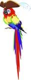 Papegojan piratkopierar in hatten Arkivfoton