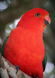 Papegojaprofil Royaltyfri Bild