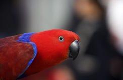 papegojared Arkivbilder