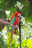 Papegojasammanträde på filialen Royaltyfri Bild