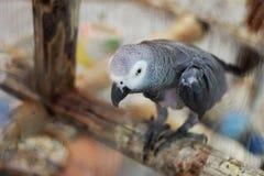 Papegojasammantr?de p? en f?rgrena sig arkivfoto