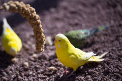 Papegojastående av fågeln Djurlivplats från vändkretsnaturen Royaltyfri Foto