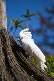 Papegojastående av fågeln Djurlivplats från vändkretsnaturen Arkivfoton