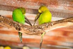 Papegojastående av fågeln Djurlivplats från vändkretsnaturen Arkivbild