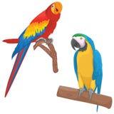 Papegojavektorillustrationer Royaltyfri Fotografi