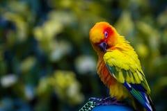 Papegojor är fåglar med långt liv, och lätt är att inkludera någon typ av reden musiken och att ha intelligensen royaltyfria bilder