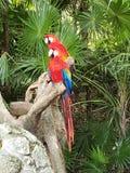 papegojor royaltyfri bild