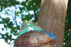papegojor Royaltyfri Fotografi