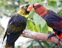 papegojor Arkivfoton