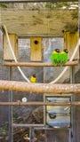 Papegojor i cell Fotografering för Bildbyråer